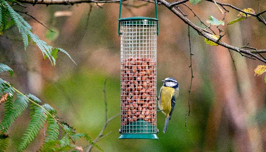 As a birdwatcher, coronavirus has turned the tables