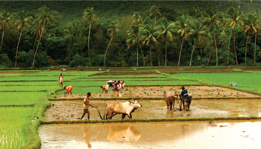 Sitharaman's New Deal for Indian farmers