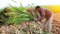 Farmers may rescue Indian economy this year