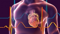 The protein that could reduce damage from a heart attack