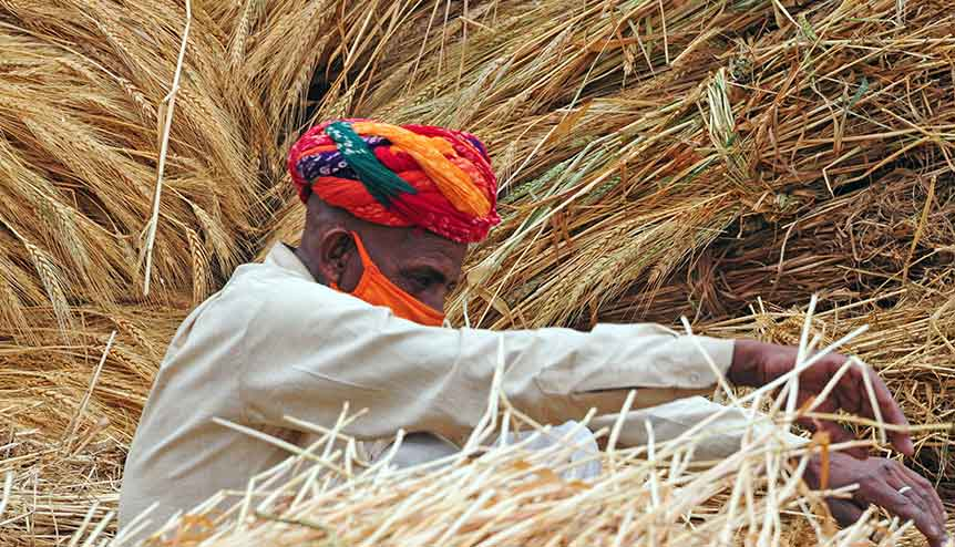 In bumper harvests the govt. must ensure the well-being of the farmer and the consumer