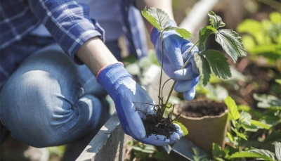 How gardening boosts your mental health