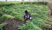 Digitalisation has brough a fresh breath to India's agricultural culture