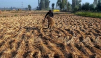 India poised for major investments from UAE in food, agritech